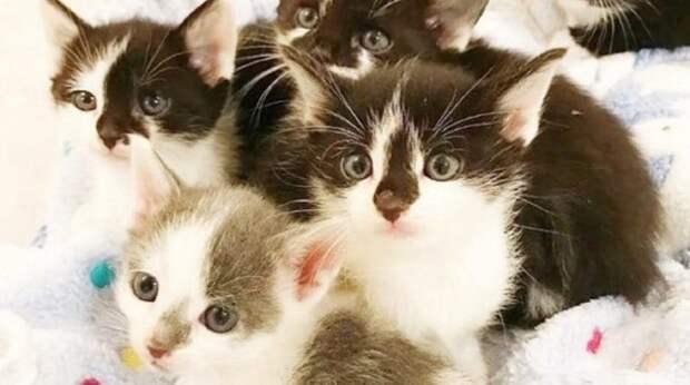 Котята без мамы жались друг к другу на улице. Как пушистики нашли «временного папу»