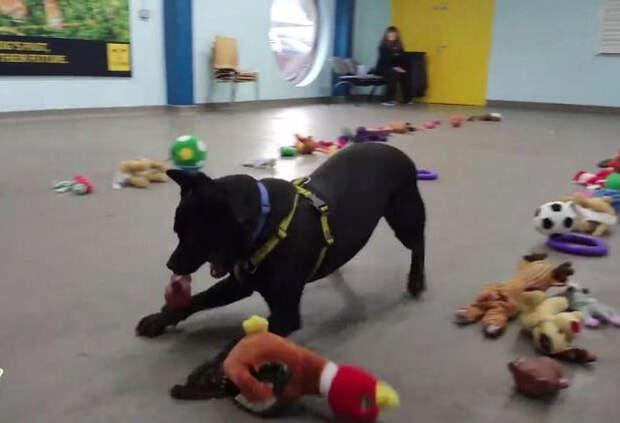 Этим песикам из приюта разрешили самостоятельно выбрать себе игрушку. Посмотрите на эти счастливые мордахи!