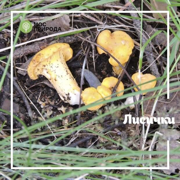 В Алёшкинском лесу за сбор урожая накажут штрафом