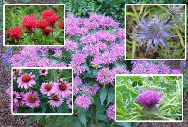 целебные растения на огороде