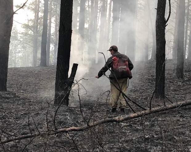Бороться с лесными пожарами в Иркутской области начнут арендаторы земель