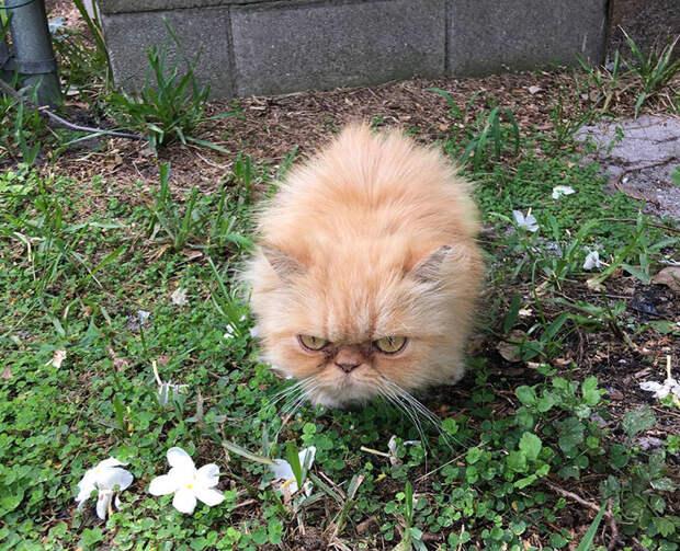 Инспектор забрал кота домой и назвал Гарфилдом животные, кот, хозяин