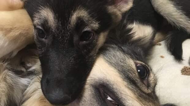 Девушка случайно увидела в соцсетях фото щенка с огромными глазами. Он ещё не знал, что мир может быть жесток