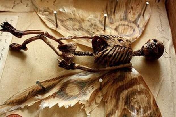 В Лондоне в подвале дома нашли коллекцию странных скелетов неизвестных существ.