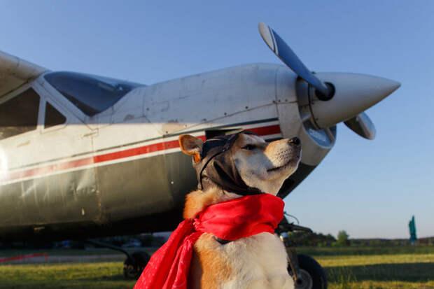 Жительницу Омска задержали за прогулку с собакой в салоне самолёта