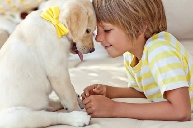 На лекциях слушатели узнают, как правильно ухаживать за животными / Fotobank
