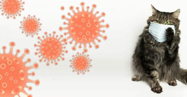 Коронавирус у кошек, спасение авиакомпаний и расходы на маски с перчатками