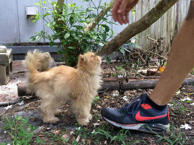 Гарфилд производит впечатление сердитого кота, который презирает всех вокруг, но на самом деле он счастлив, что обрел хозяев животные, кот, хозяин