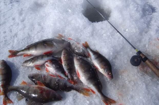 Почему бывалые рыбаки часто возле лунки оставляют ерша, и другие странности их поведения