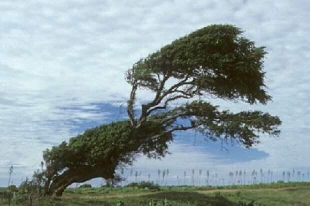 В ближайшие часы тамбовчан ожидают грозы и штормовой ветер