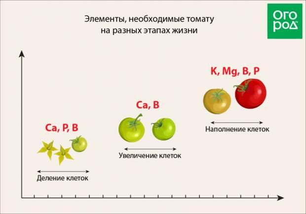 чем как и когда подкормить помидоры