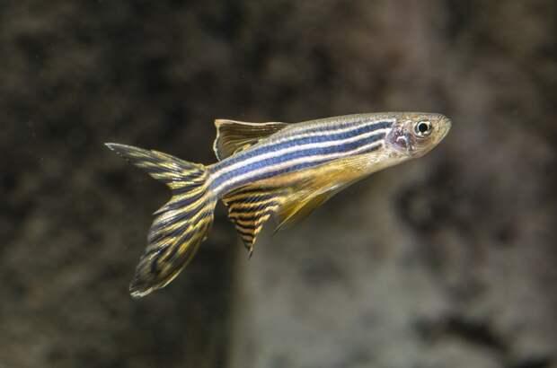 Учёные проверили действие излучения 4G и 5G на организме рыб