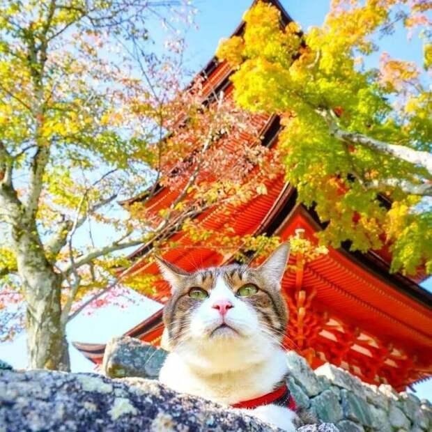 Зная, какими кошки бывают мстительными и капризными, неудивительно, что они начали мстить хозяину и агрессивно себя вести в мире, домашний питомец, животные, кошки, люди, природа, путешествие
