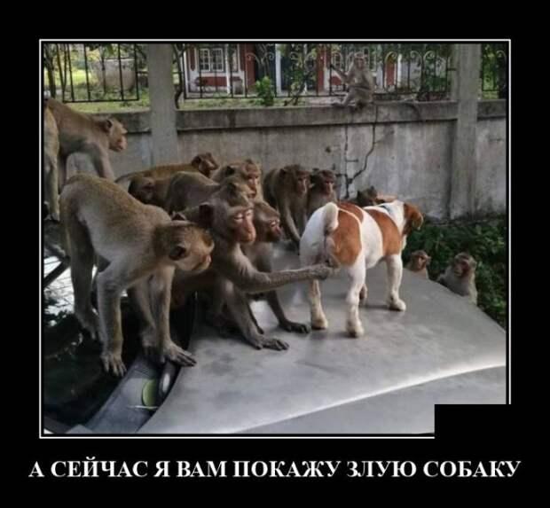 Демотиватор про злую собаку