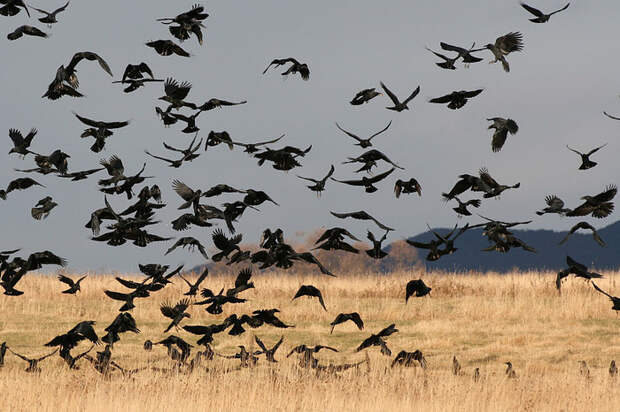 Птички, мать их! Птицы, Газон, Дача, Длиннопост