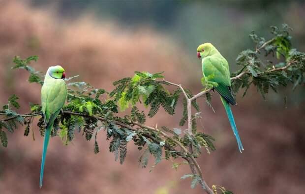 Попугаи делятся друг с другом едой.