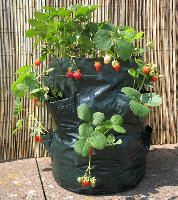 Выращивание клубники в мешках.jpg