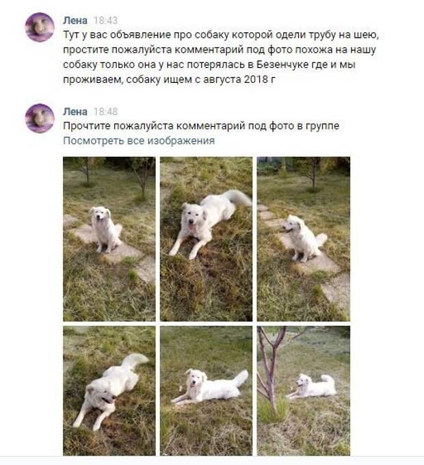 Дальше случилось самое удивительное - нашлись хозяева пса. Нет, они живут не в Кичкилейке и даже не в Пензенской области. жестокость, зоозащитники, история, пенза, пензенская область, пес, собака