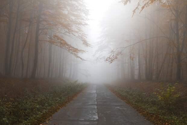 Туманный и дождливый понедельник пришел в Удмуртию
