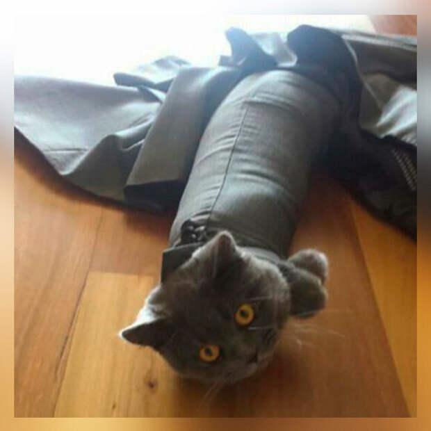 10 фото-доказательств того, что котам очень часто нужна наша помощь