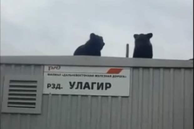 «Как спускаться будете, Винни-Пухи?» :) Этот день зейские железнодорожники запомнят надолго…