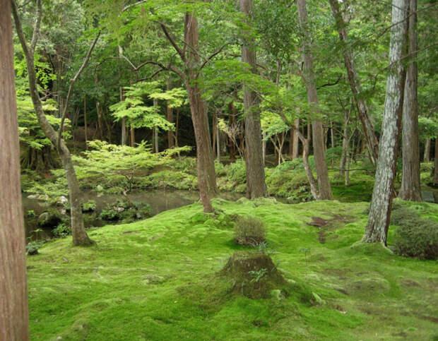 Сад мхов - храм Коинзан Сайходжи