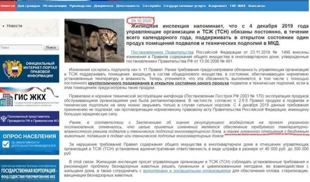 В Ижевске зоозащитники пытаются добиться для кошек права жить в подвалах