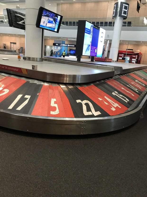 В аэропорту Лас-Вегаса день, животные, кадр, люди, мир, снимок, фото, фотоподборка