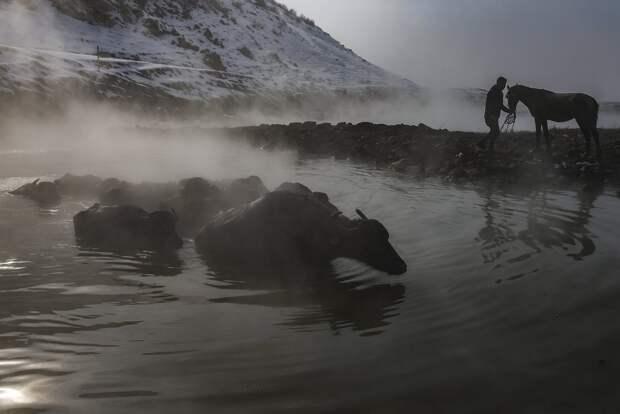 Буйволы тоже любят нежиться в горячих источниках в Восточной Турции