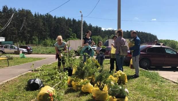 Активисты посадили саженцы и убрали лес возле ЖК «Весенний» в Подольске
