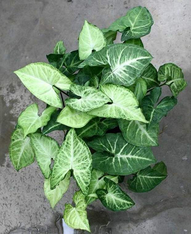12 растений, которые не возможно загубить!