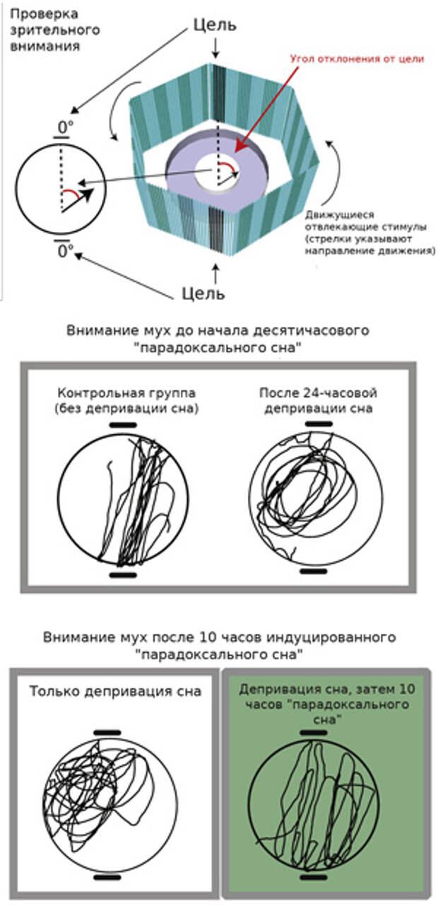 Рис. 6. Установка для оценки зрительного внимания дрозофил