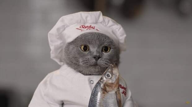 Видео: Как бы выглядело кулинарное шоу, если бы участниками были животные