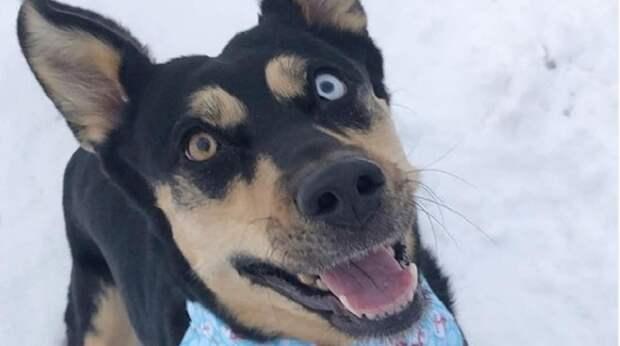 Строгая мама не разрешала взять в дом Скайлар, но эти разноцветные глаза были способны растопить любой лёд