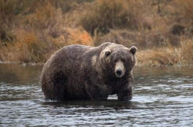Британка спасла своего парня от медведя дельным советом