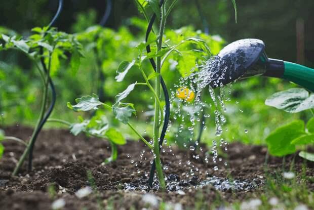 8 ошибок, о которых должен знать каждый садовод