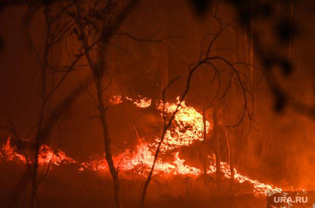 ВТурции задержали подозреваемого вподжоге лесов