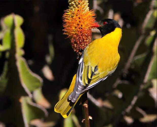 Birds_34 (700x566, 281Kb)