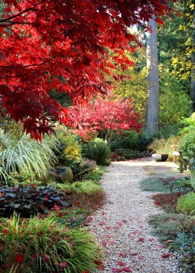 Современный Сад by Bliss Garden Design