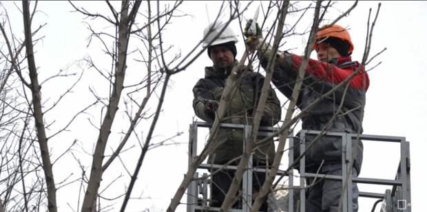 На Пятницком шоссе провели санитарную обрезку деревьев