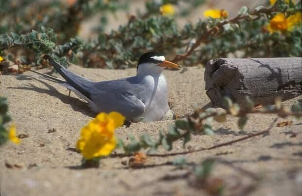 Сотни птиц бросили свои гнезда: их напугал дрон