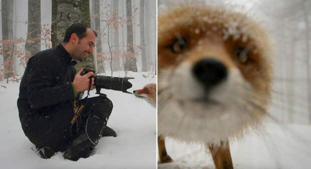 По ту сторону камеры. 15 смешных случаев, когда животные мешали фотографам дикой природы