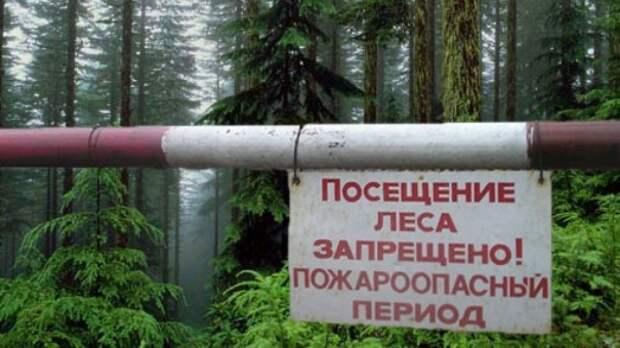 В Крыму запретили ходить в лес из-за угрозы пожаров