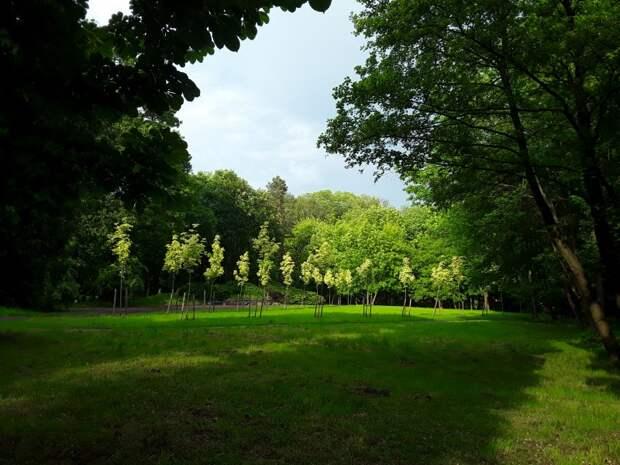 Деревья и цветы в конце мая