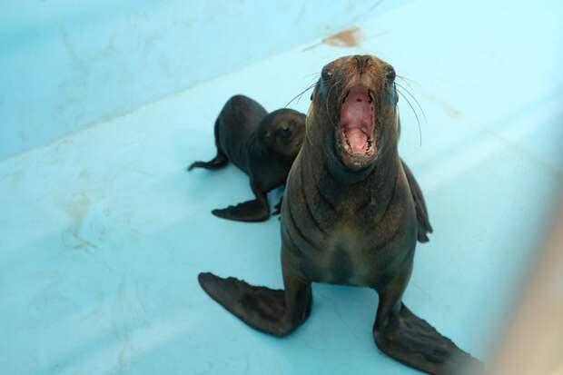 Петербургский дельфинарий «уплывает»в другой город: договор аренды не продлили, артистов выселяют