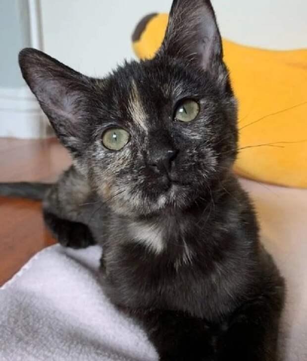 Кроха-котенок едва дышал, лежа под ветками дерева, но чьи-то руки вернули его к жизни