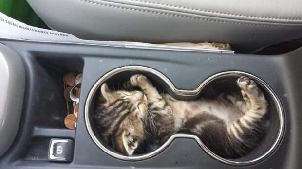33 котика, которые заснули в самых удивительных и необычных позах