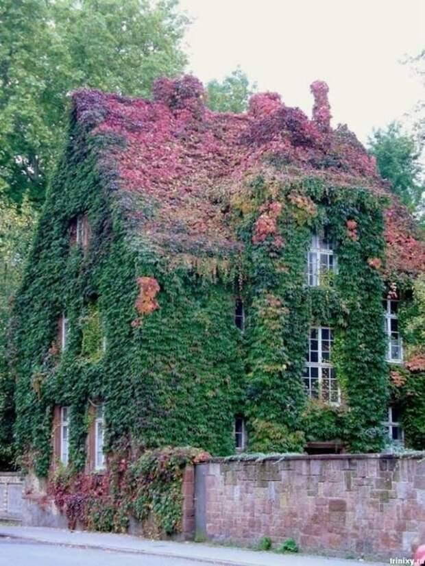 И немного плюща Зелены, Фабрика идей, дом, красота, перебор, садоводы, цветы
