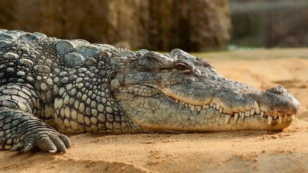 Ялтинский крокодиляриум затопило по самый потолок