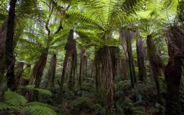 Новозеландские насекомые начали быстро эволюционировать — в чём причина и почему это опасно?